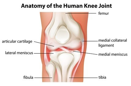 mcl injury medial collateral ligament knee doctor in louisville ky